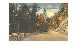 Skyline Drive, Clinton's Dome, Great Smoky Mountain Park, Tennessee, Used 1964