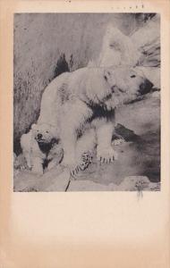 Mother Polar Bear With Cub San Diego Zoo 1944