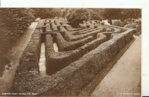 Middlesex Postcard - Hampton Court Palace - The Maze - Real Photo - Ref 8068A