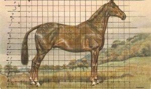A Noble Horse Vintage Swiss postcard