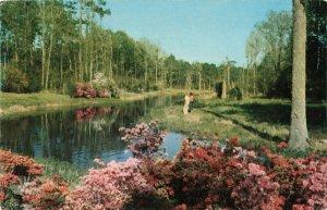 Postcard Lagoon at Beauvoir Jefferson Davis Shrine Biloxi Mississippi