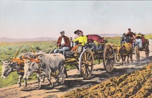 Ox Carts , TERNI , Italy , 00-10s