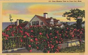 Massachusetts Cape Cod Rose Blossom Time 1956 Curteich