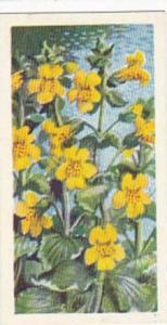 Brooke Bond Tea Trade Card Wild Flowers No 27 Monkey Flower