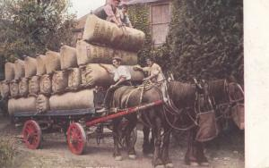 Hop Picking Loading Leeds Sacks Pockets for Markets Vintage Postcard