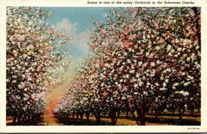 Arkansas Scene In One Of The Many Orchards In The Arkansas Ozarks 1942 Curteich