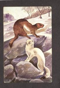 Animals Animal Postcard Artist Signed Painting Weasels Harvey Carte Postale