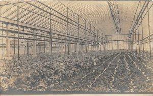 G48/ Interesting Real Photo RPPC Postcard c1910 Greenhouse Interior 12