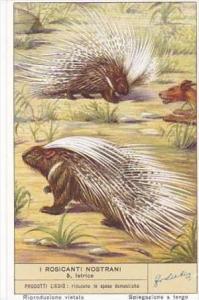 Liebig S1601 Rodents No 5 Porcupine