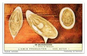 Eggs and Miracidia Larvae Schistosomiasis Bilharziosis Liebig Belgian Trade Card
