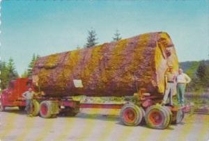 Logging Truck With Giant Fir Log