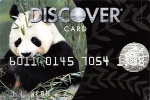 Bear Post Card Discover Card, Panda Bear Unused
