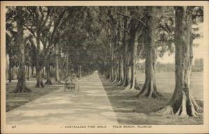 Palm Beach FL Australian Pine Walk c1920 Postcard