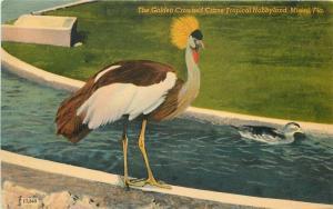 Amusement Golden Crane Hobbyland 1940s Postcard Miami Florida 5763