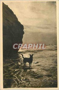 Postcard Old Zion on the Ocean (Vendee) Waves effect before the Storm Dog