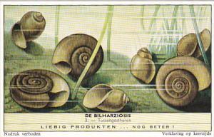 Liebig Trade Card s1751 Bilharziosis Parasite Disease No 3 Tussengastheren