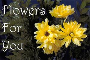 PACK of 3 New FLOWERS FOR YOU Postcards, Yellow Flower Design