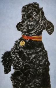 Dog -  Poodle (Black)