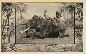 Africa Safari 1909 Series by Mintz of Chicago - Hunting from Elephant - DB