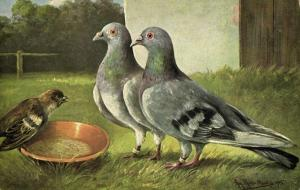 Pigeon Dove, Bird Postcard (1910s) Artist Signed (2)