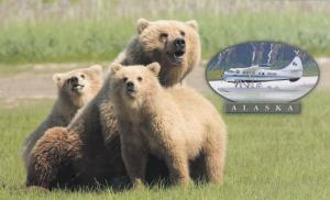Emerald Air Service Airplane & Grizzley Bears, HOMER , Alaska , 70-90s