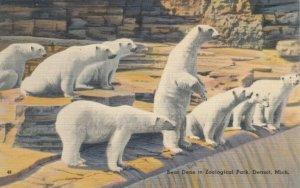 DETROIT , Michigan, 30-40s ; Polar Bear Dens at Zoological Park