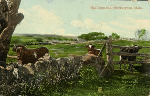 MA - Newburyport. Old Town Hill Scene