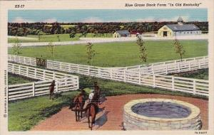 Kentucky Blue Grass Storck Farm In Old Kentucky