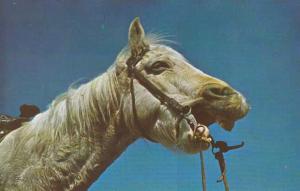 Horse Laugh - He Laughs best who Laaughs last