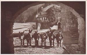 RP; We Are Seven, Donkeys, Clovelly, North Devon, England, UK, 10-20s