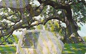 Indiana South Bend Council Oak In Highland Cemetery