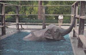 Ohio Toledo Zoological Park Baby Elephant Toots In Her Bath