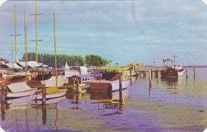 Fishing Fleet In Florida