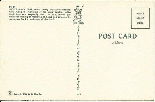 Black Bear Smoky Mountains National Park - 1950 Vintage Postcard