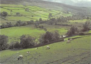 uk36395 swaledale pasture  uk lot 6 uk