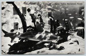 St Augustine Florida~Marineland~Sharks & Shipwrecks @ Marine Studios on A1A 1949