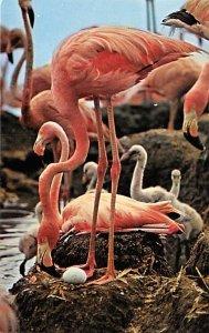 Flamingos Animals, Misc, Unused