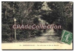 Old Postcard Doudeville A Allee In The Wood Berville