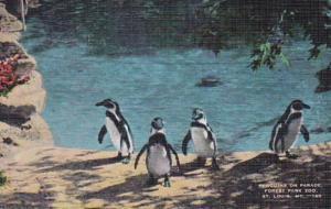 Missouri St Louis Penguins On Parade Forest Park Zoo