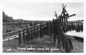 Real Photo Postcard Drying Salmon Along The Yukon in Alaska~121356