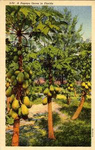 FL - Papaya Grove, Plantation