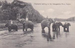 Elephants Bathing In The Katugastota River Ceylon