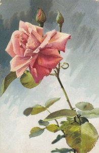 STILL LIFE, PU-1913; Bloomed Rose and rose buds