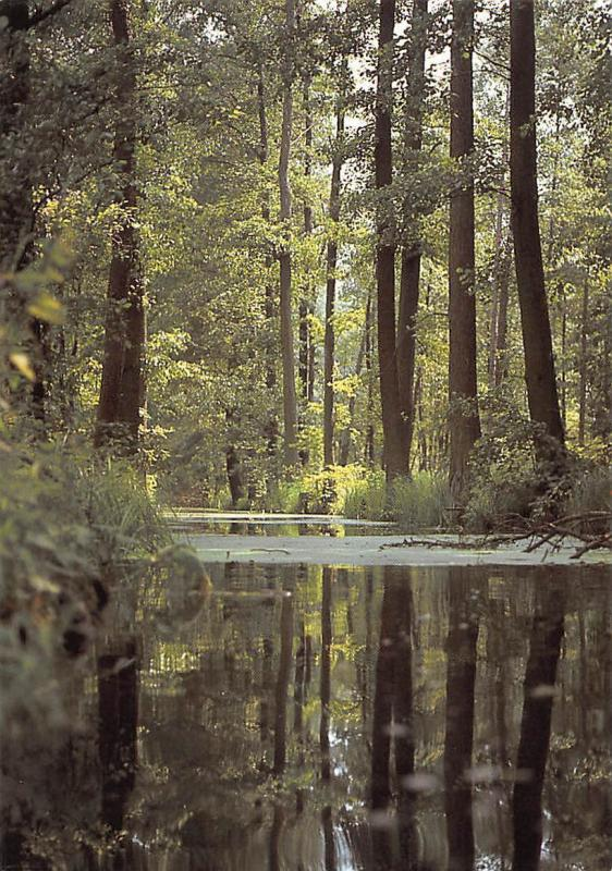 Im Spreewald Forest River Reflection Landscape