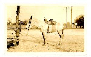 A Saddled Donkey      *RPPC