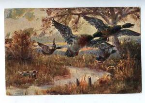 183199 Duck hunting with dog setter Vintage postcard