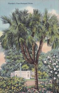 Florida Daytona Beach Florida's Four Pronged Palm
