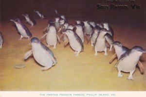 The Famous Penguin Parade Phillip Island Victoria Australia Postcard