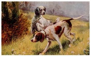Dog Spaniels's Hunting