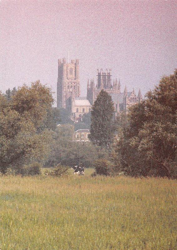Ely Cathedral Cattles Dom Cattedrale Panorama